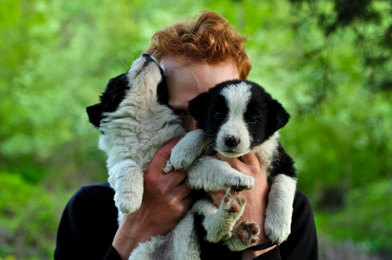 Tyler & Abandoned Pups